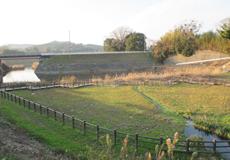 八瀬水生植物園